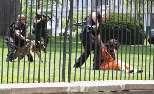 Diane Wilson arrested after jumping White House fence